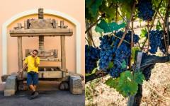 Wine press - Grapes